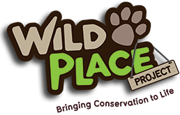 Wild Place promo codes